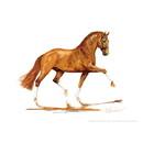 Jan Kunster Horse Prints - Indian Summer 2 (Dressage)