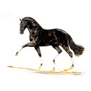 Jan Kunster Horse Prints - Bordeaux (Dressage)