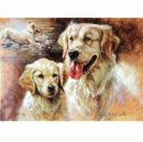 Card Golden Retriever 6 Per Pack, HGB58
