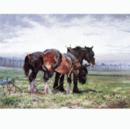 Horses - Waiting to Work (Draft Horse) - 6 pack