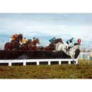 Corinium Horse Prints - Desert Orchid (Horse Racing)