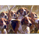 Dogs - Expectations (Foxhound) - 6 pack