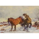 Haddington Green Equestrian Art HGC492X Christmas Cards, Winter Playmates, 10 Pack