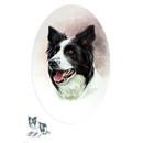 Sally Mitchell Fine Art Dog Prints - Border Collie