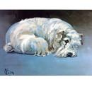 Sally Mitchell Fine Art Dog Prints - Sealyham Terrier