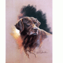 Intrepid International Sally Mitchell Fine Art Dog Prints - Chocolate Lab