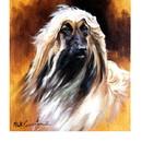 Sally Mitchell Fine Art Dog Prints - Afghan
