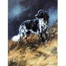 Sally Mitchell Fine Art Dog Prints - Munsterlander
