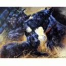 Sally Mitchell Fine Art Dog Prints - The Scottie