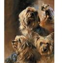 Sally Mitchell Fine Art Dog Prints - Vanity Fair
