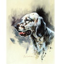 Sally Mitchell Fine Art Dog Prints - English Setter