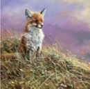 Sally Mitchell Fine Art Wildlife Prints - Sunbathing (Fox)