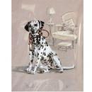 Print Dalmatian, David Thompson 12 3/4 x 10 3/4