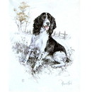 Print Springer Spaniel, David Thompson 12 3/4 x 10 3/4