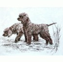 Corinium Fine Art Dog Prints - Irish Water Spaniel