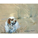 Corinium Fine Art Dog Prints - Clumber Spaniel