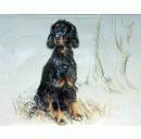 Corinium Fine Art Dog Prints - Gordon Setter