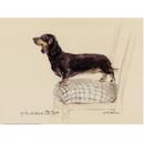 Corinium Fine Art Dog Prints - Smooth Dachshund