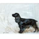 Corinium Fine Art Dog Prints - Black Cocker Spaniel