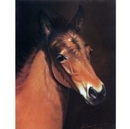 Horses - Baby Face - 6 Pack