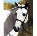 Horses - A Familiar Voice - 6 Pack