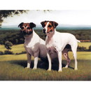 Dogs - Wisdom & Youth (Jack Russells) - 6 Pack