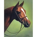 Horses - Southern Belle - 6 Pack
