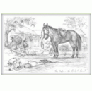 Jude Too Greeting Cards - Horses - No Rider At Present - 6 pack