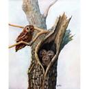 Sally Mitchell Fine Art Wildlife Prints - Family Tree (Owls)