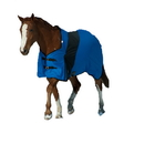 Fortex Exselle Prima Blanket-Royal Blue with Black