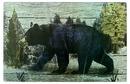 IWGAC 0126-60049 Bear Cutting Board/Hot Pad