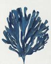Jeco HD-WD028 16 X 20 Blue Tree Oil Paint Wall Decor