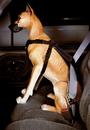 Car Safety Harness(XS)