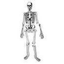 Learning Resources LER3332 Skeleton Foam Floor Puzzle