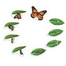Learning Resources LER6043 Giant Magnetic Butterfly Life Cycle