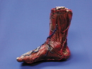 Morris Costumes 85-057 Skinned Right Foot