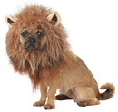 California Costumes CCPET20166 King Of Jungle Dog Costume