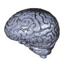 Morris Costumes DU-1022 Brain-Human Grey