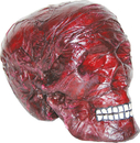 Morris Costumes SS-70229 Burnt Skull