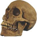 Morris Costumes TA-495 Skull Resin Cranium*