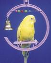 Penn-Plax Swing w/Beads & Bell