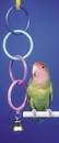 Penn-Plax Super Olympic Rings w/Bell
