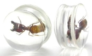 Painful Pleasures P082-ant ANT - Actual Ant inside an Acrylic Plug - 16mm - 24mm - Price Per 1