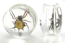 Painful Pleasures P084-spider Spider - Real Spider inside Acrylic Plug - 16mm-24mm - Price Per 1