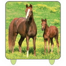 WILD HORSES PRINTED CANDLE