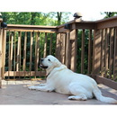 Cardinal SS-30OD/BR Stairway Special Outdoor Pet Gate - Brown