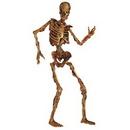 Custom Jointed Skeleton Figure, 6' L