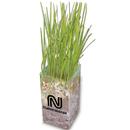 Custom Wheatgrass Grow Kit, 4