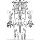 Roylco Skeleton Art Aprons, RYL59801