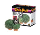Joseph Enterprises JEI-CP042-01-C Chia Pet Grass Planter: Bunny